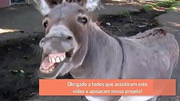 jumento- um iacute_cone do sertatilde_o nordestino.