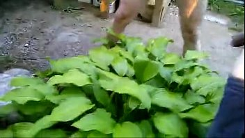 duo urinating together on a plant